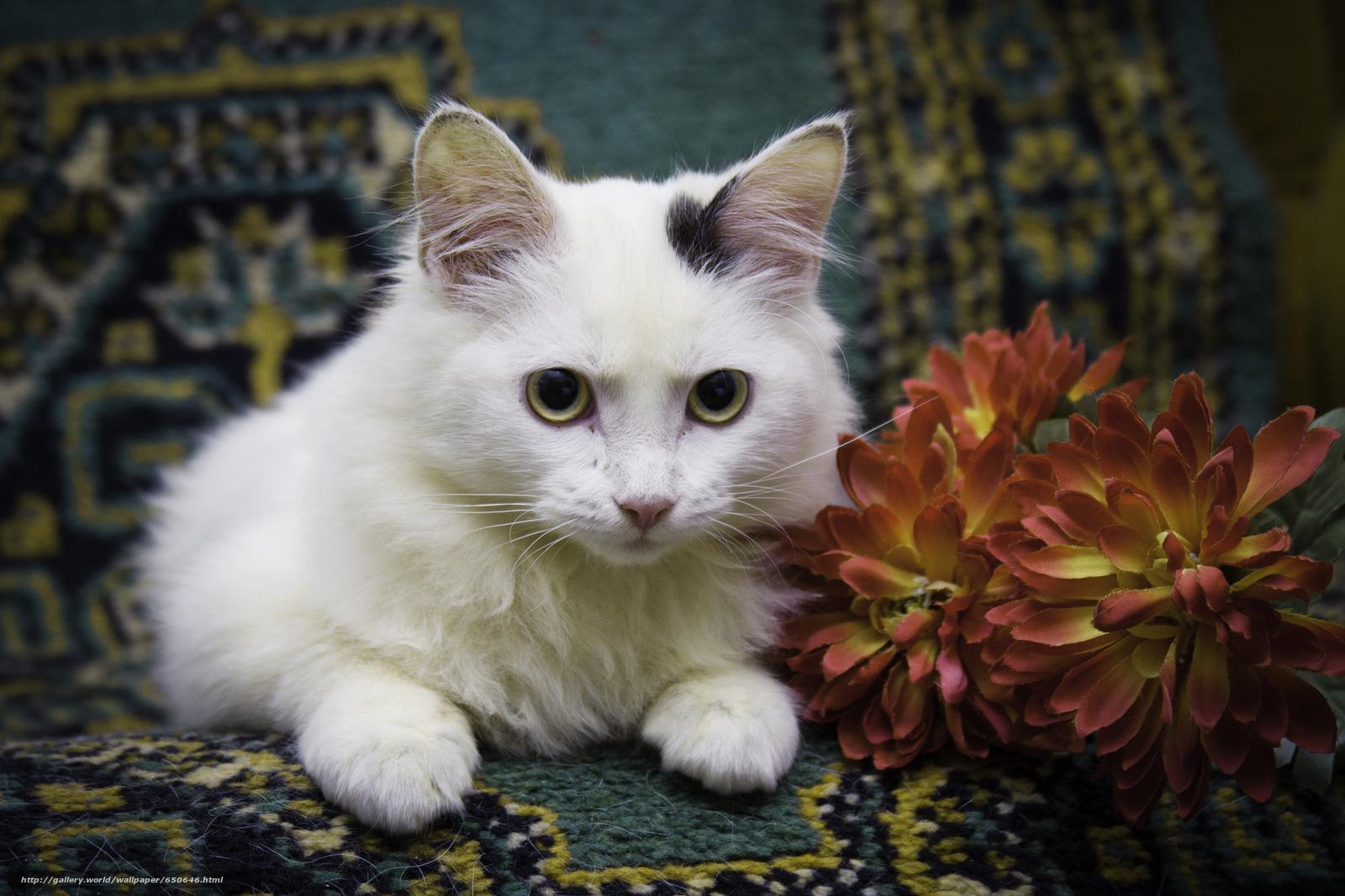 scaricare gli sfondi COTE,  gatto,  gatto,  gattino Sfondi gratis per la risoluzione del desktop 3803x2535 — immagine №650646