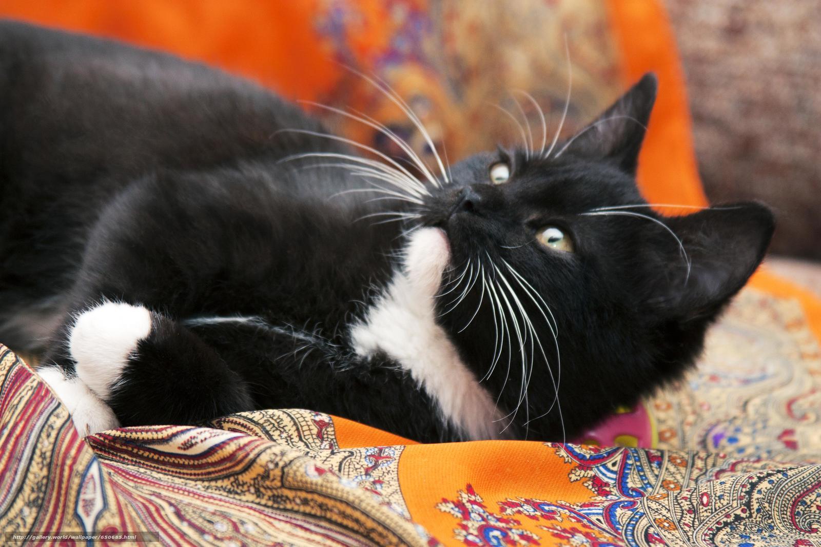 scaricare gli sfondi COTE,  gatto,  gatto,  sfondo Sfondi gratis per la risoluzione del desktop 4272x2848 — immagine №650685
