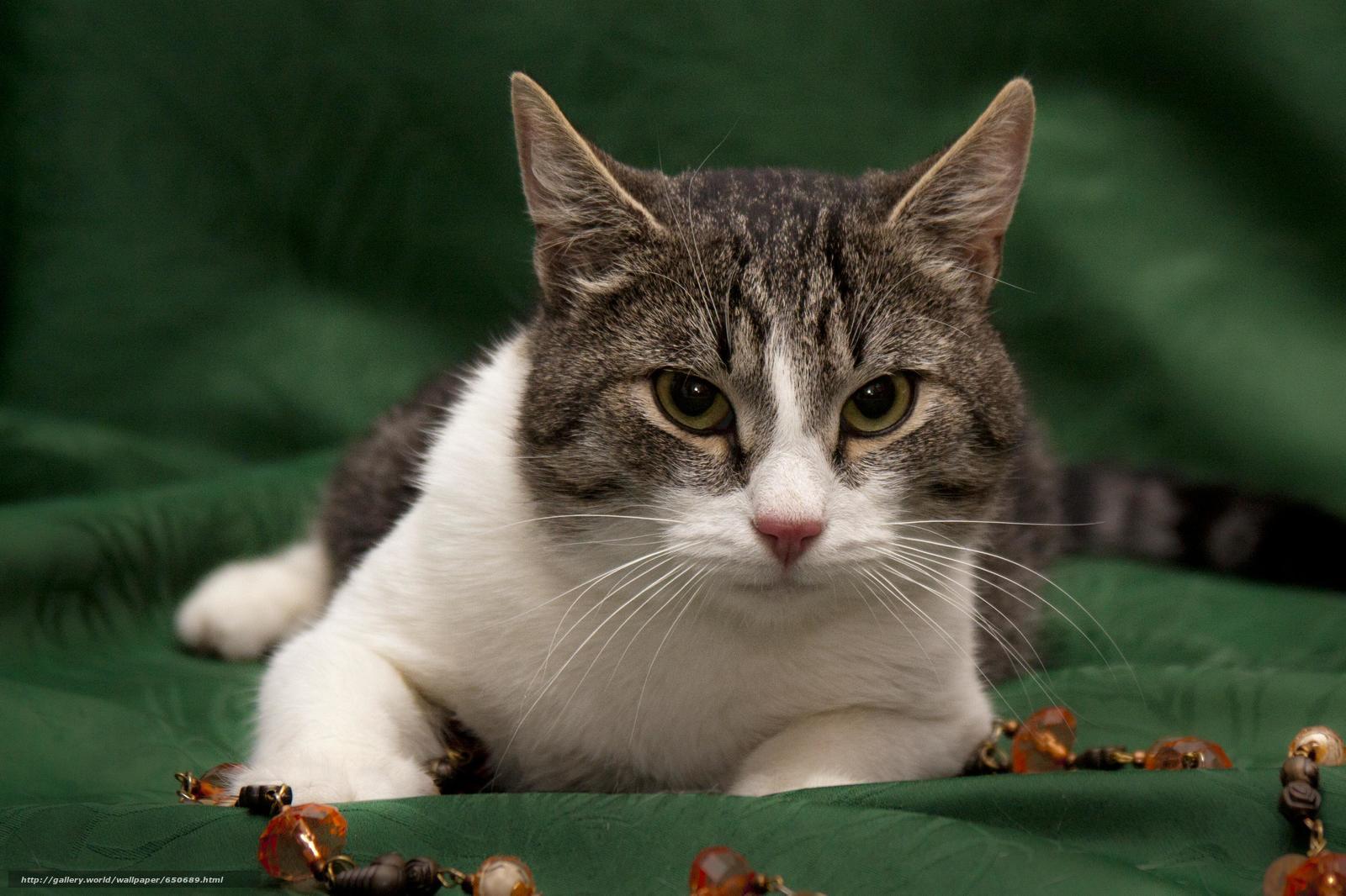 scaricare gli sfondi COTE,  gatto,  gatto,  sfondo Sfondi gratis per la risoluzione del desktop 3277x2184 — immagine №650689