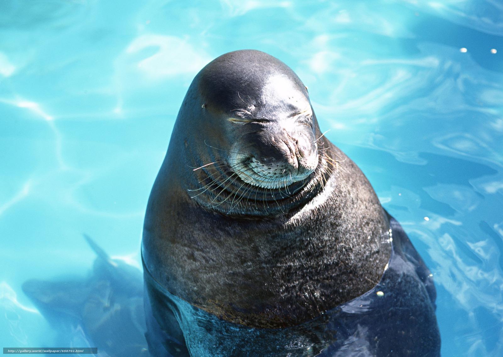 Скачать обои морской котик,  животные,  Антарктида,  купание бесплатно для рабочего стола в разрешении 2950x2094 — картинка №650701