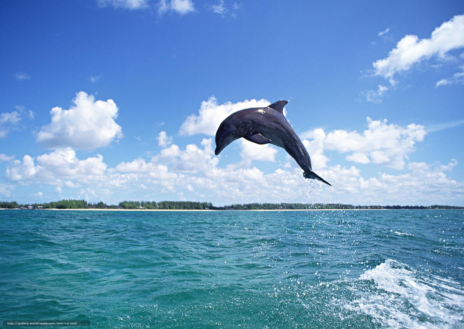 scaricare gli sfondi delfino,  DELFINI,  mare,  Mammiferi Sfondi gratis per la risoluzione del desktop 2950x2094 — immagine №650718