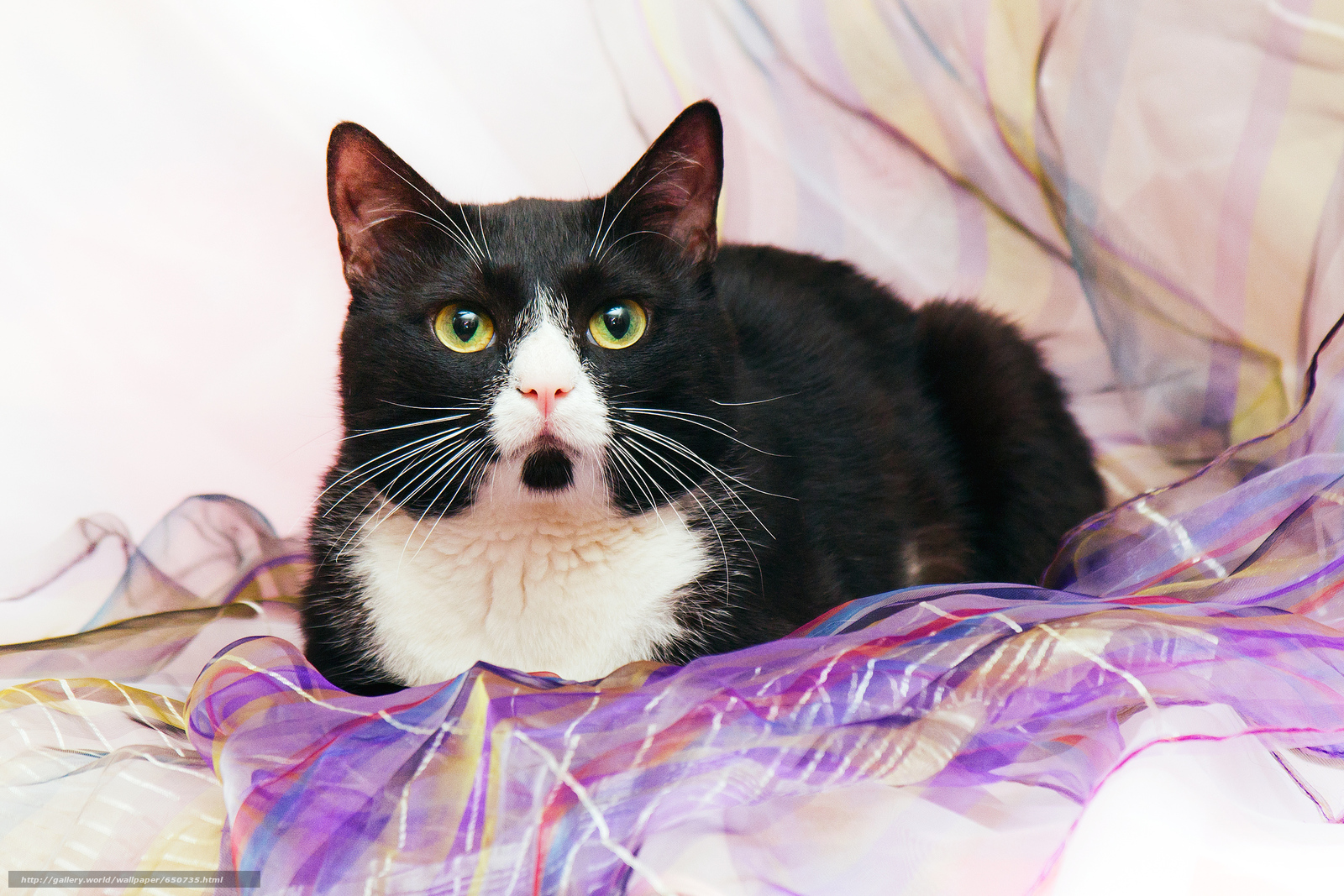 Скачать обои кот,  кошка,  кошки,  котенок бесплатно для рабочего стола в разрешении 2500x1667 — картинка №650735