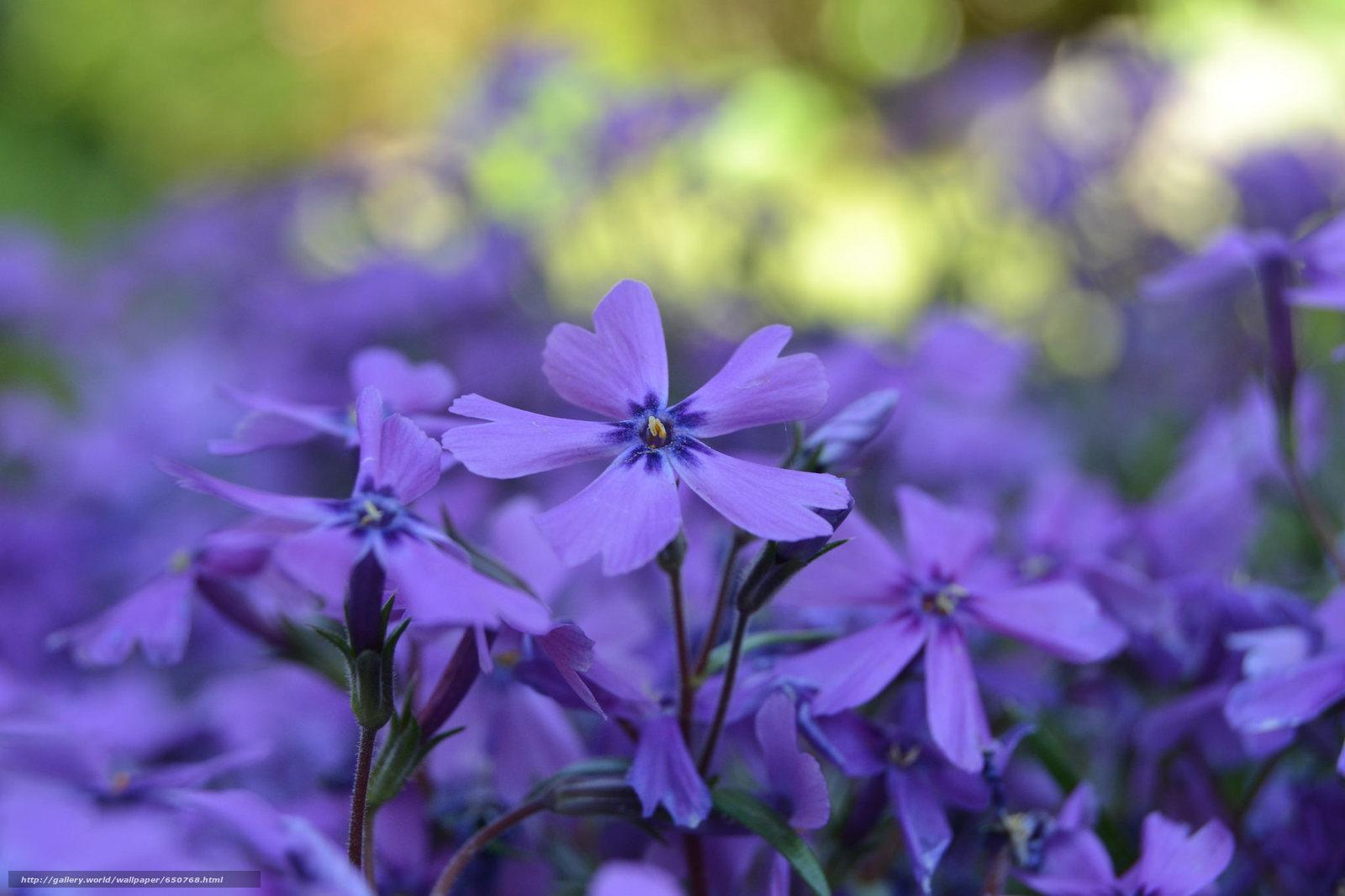 Скачать обои цветы,  цветок,  макро,  флора бесплатно для рабочего стола в разрешении 2048x1365 — картинка №650768