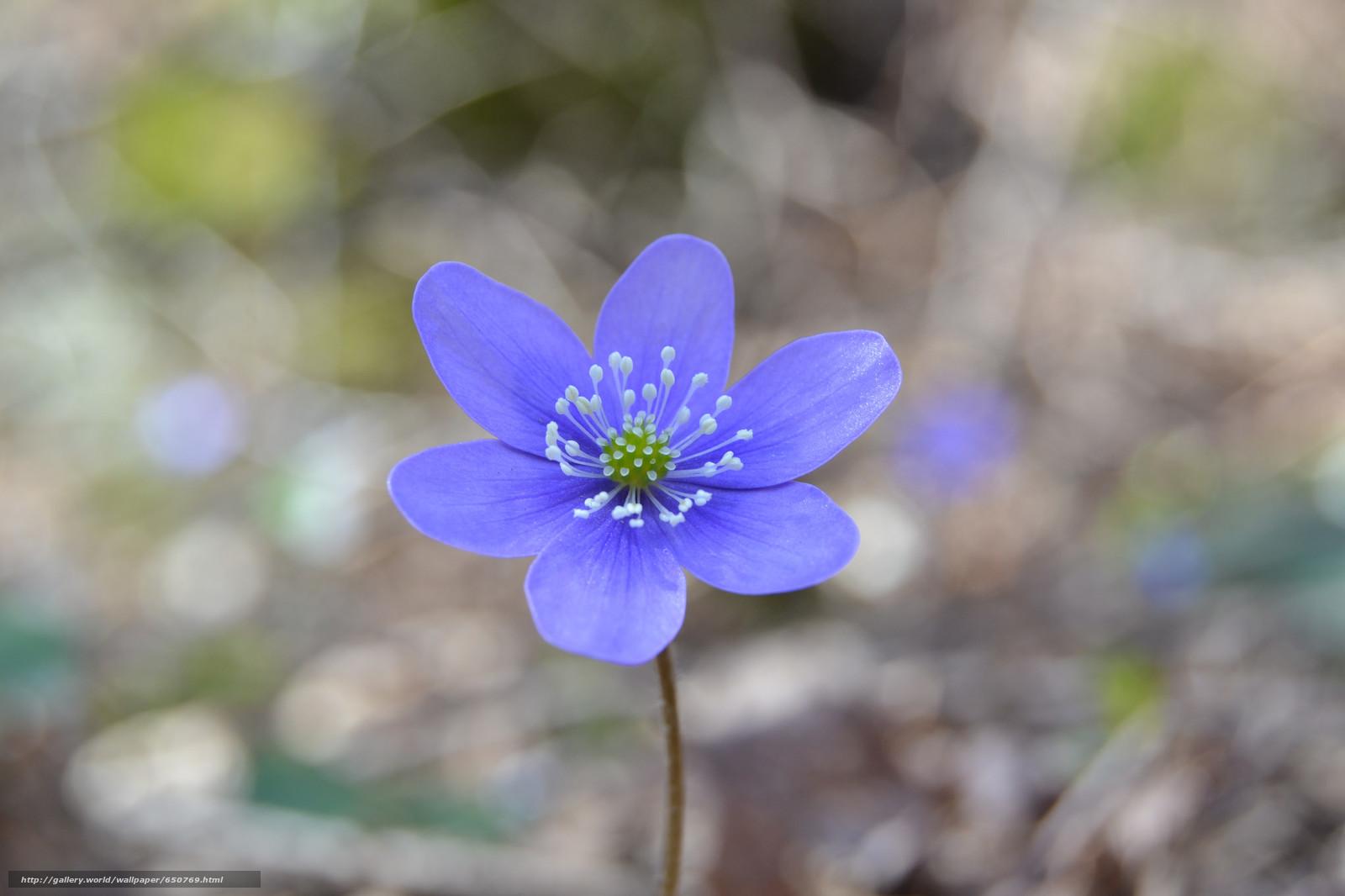 Descargar gratis Flores,  flor,  Macro,  flora Fondos de escritorio en la resolucin 2048x1365 — imagen №650769
