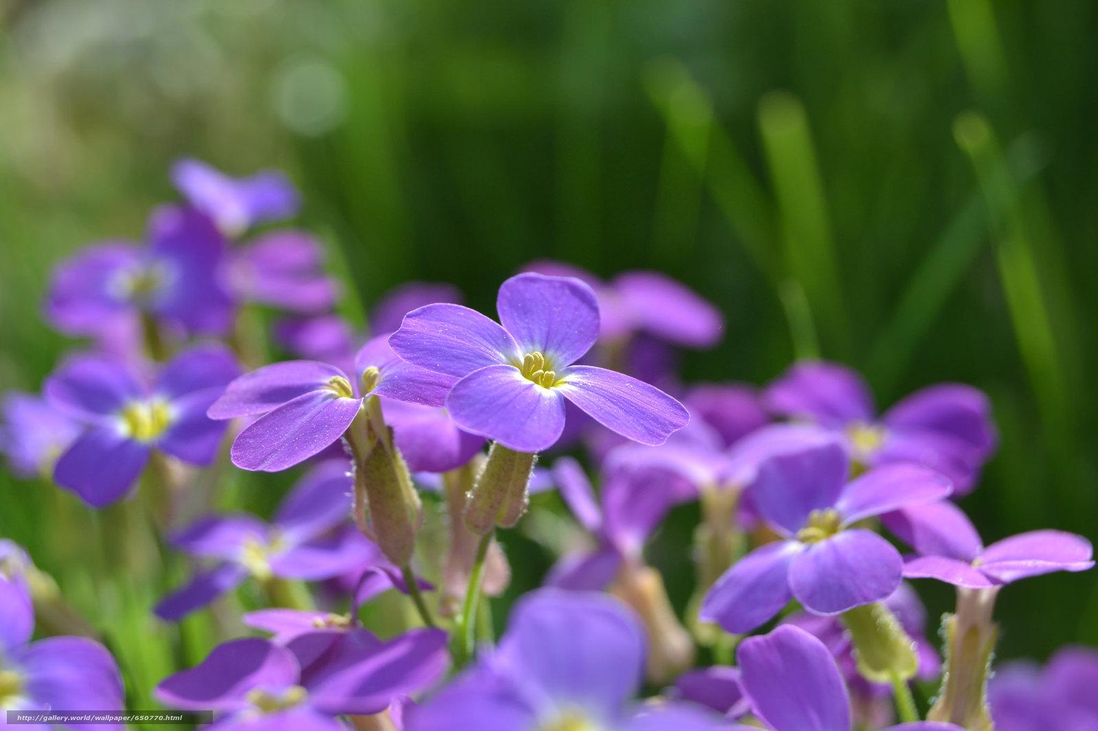 Скачать обои цветы,  цветок,  макро,  флора бесплатно для рабочего стола в разрешении 2048x1365 — картинка №650770