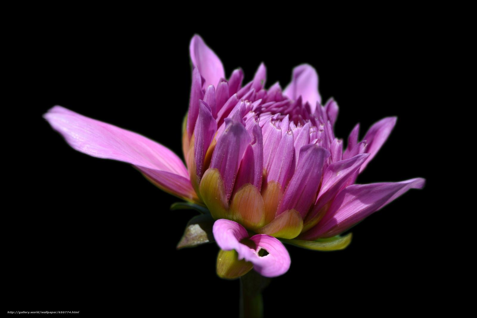 Скачать обои цветы,  цветок,  макро,  флора бесплатно для рабочего стола в разрешении 2048x1365 — картинка №650774
