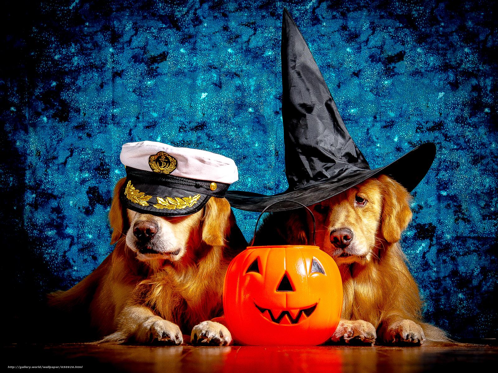 Скачать обои Лабрадор,  красивая собака,  собаки,  прикольная собака бесплатно для рабочего стола в разрешении 3745x2809 — картинка №650926