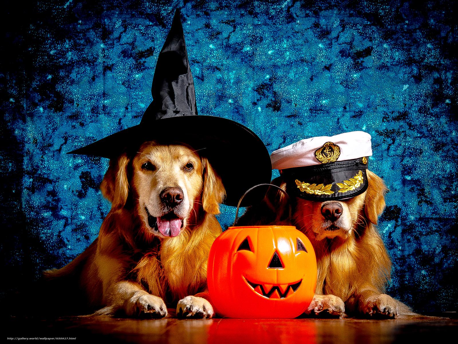 scaricare gli sfondi labrador,  bel cane,  Cane,  funny dog Sfondi gratis per la risoluzione del desktop 3745x2809 — immagine №650927