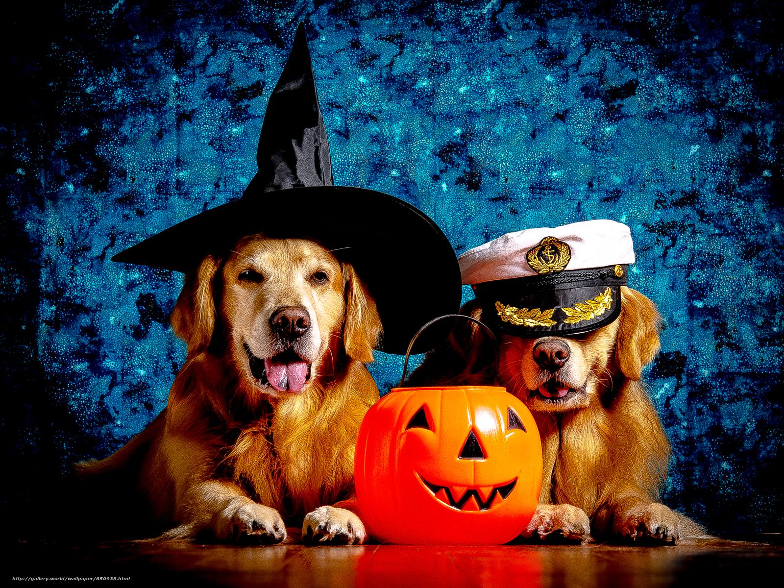 scaricare gli sfondi labrador,  bel cane,  Cane,  funny dog Sfondi gratis per la risoluzione del desktop 3745x2809 — immagine №650938