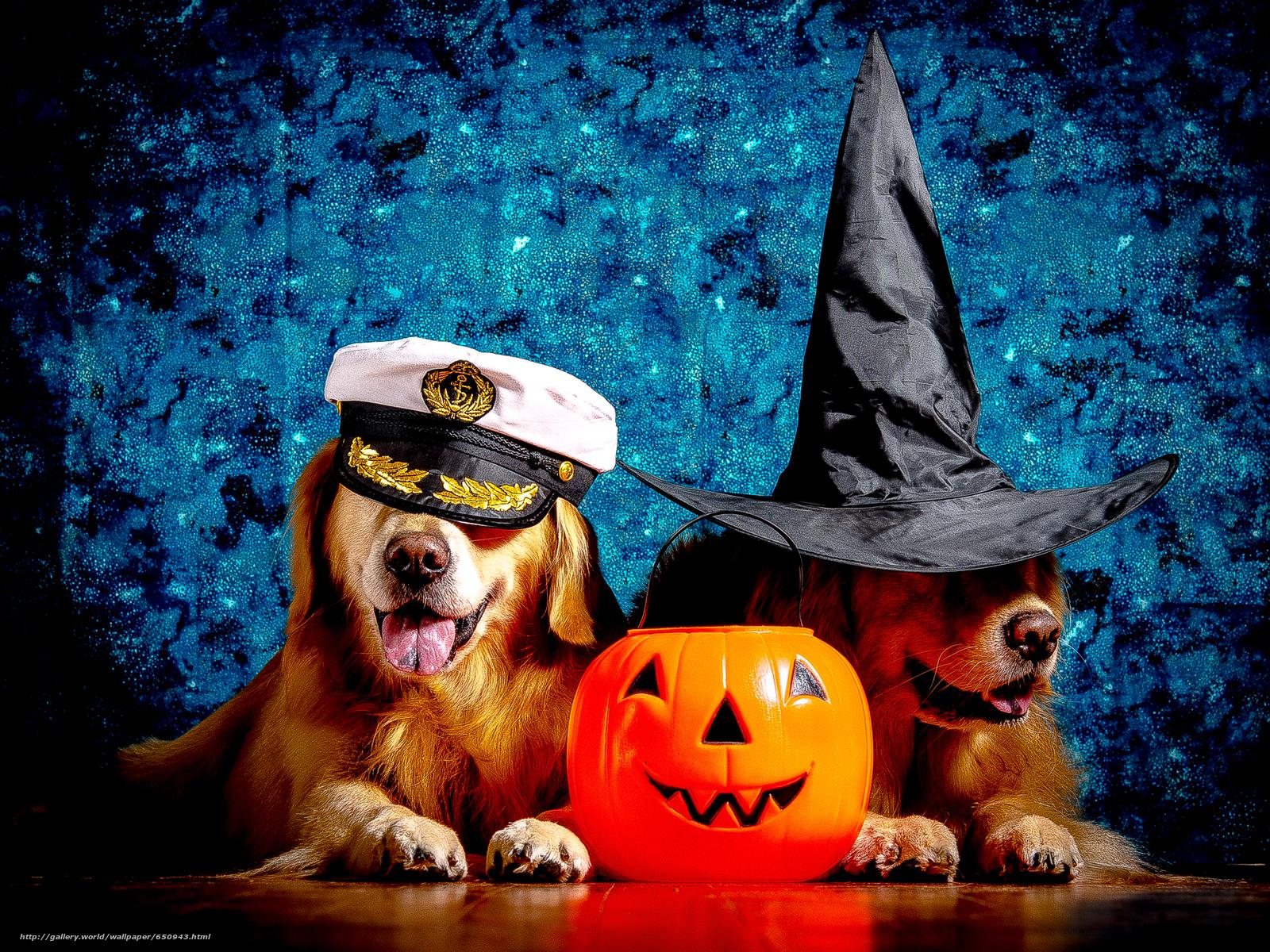 Скачать обои Лабрадор,  красивая собака,  собаки,  прикольная собака бесплатно для рабочего стола в разрешении 3745x2809 — картинка №650943