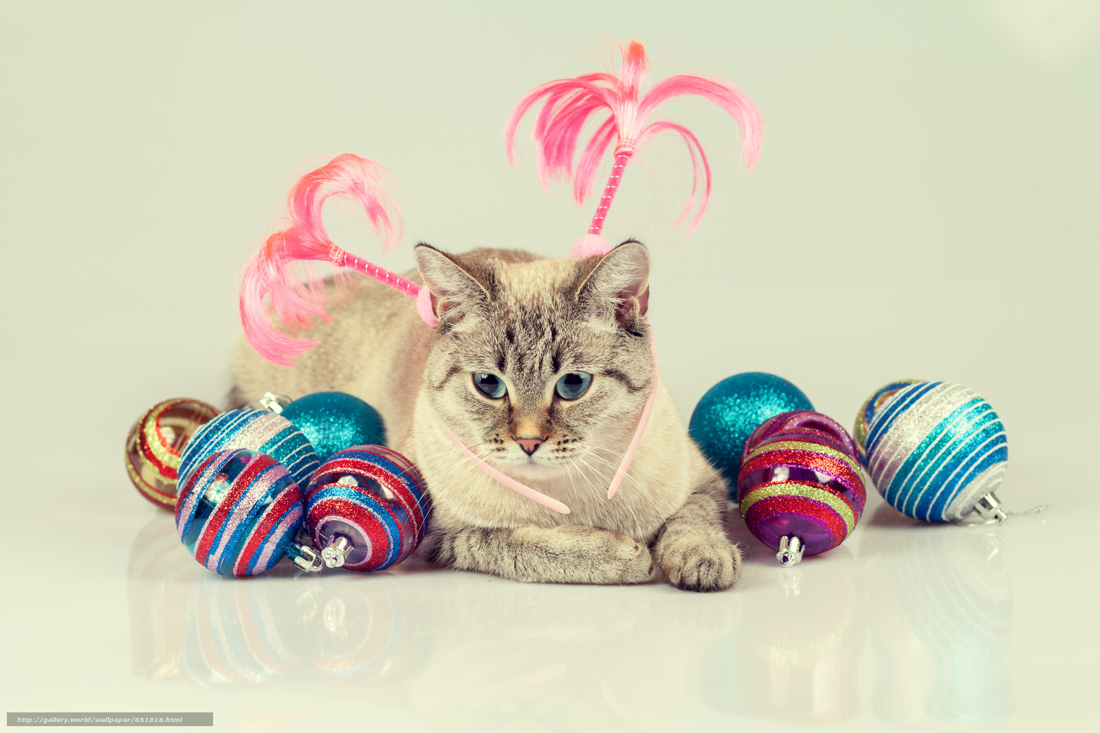 Download wallpaper COTE,  cat,  Balls,  Toys free desktop wallpaper in the resolution 5616x3744 — picture №651016