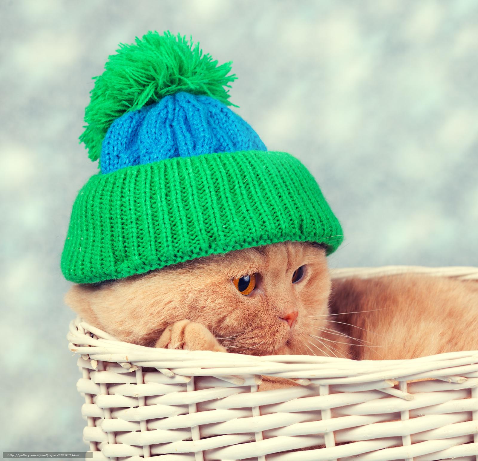 Скачать обои кот,  кошка,  шапка,  корзина бесплатно для рабочего стола в разрешении 3366x3247 — картинка №651017