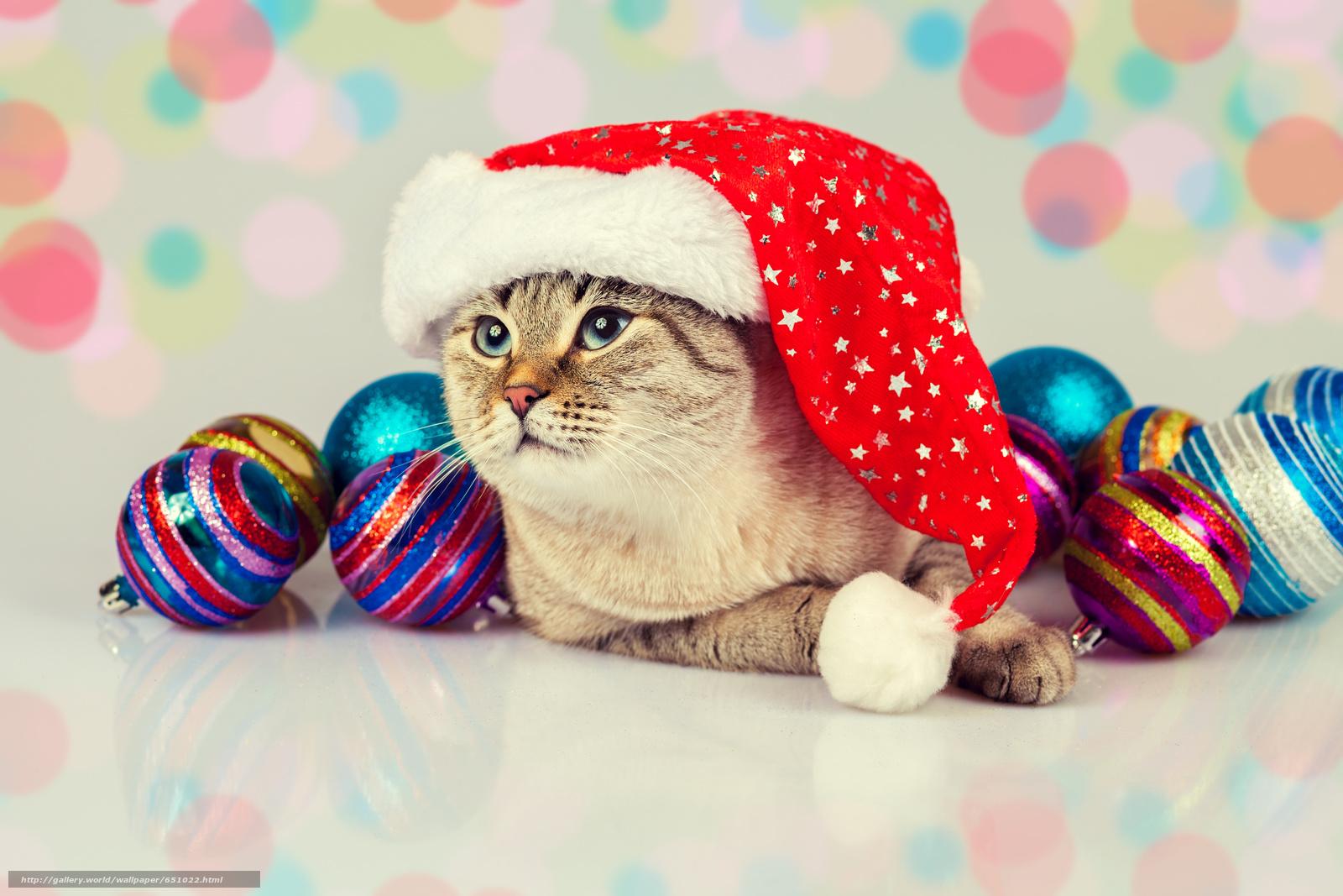 Download wallpaper COTE,  cat,  cap,  Balls free desktop wallpaper in the resolution 5616x3744 — picture №651022