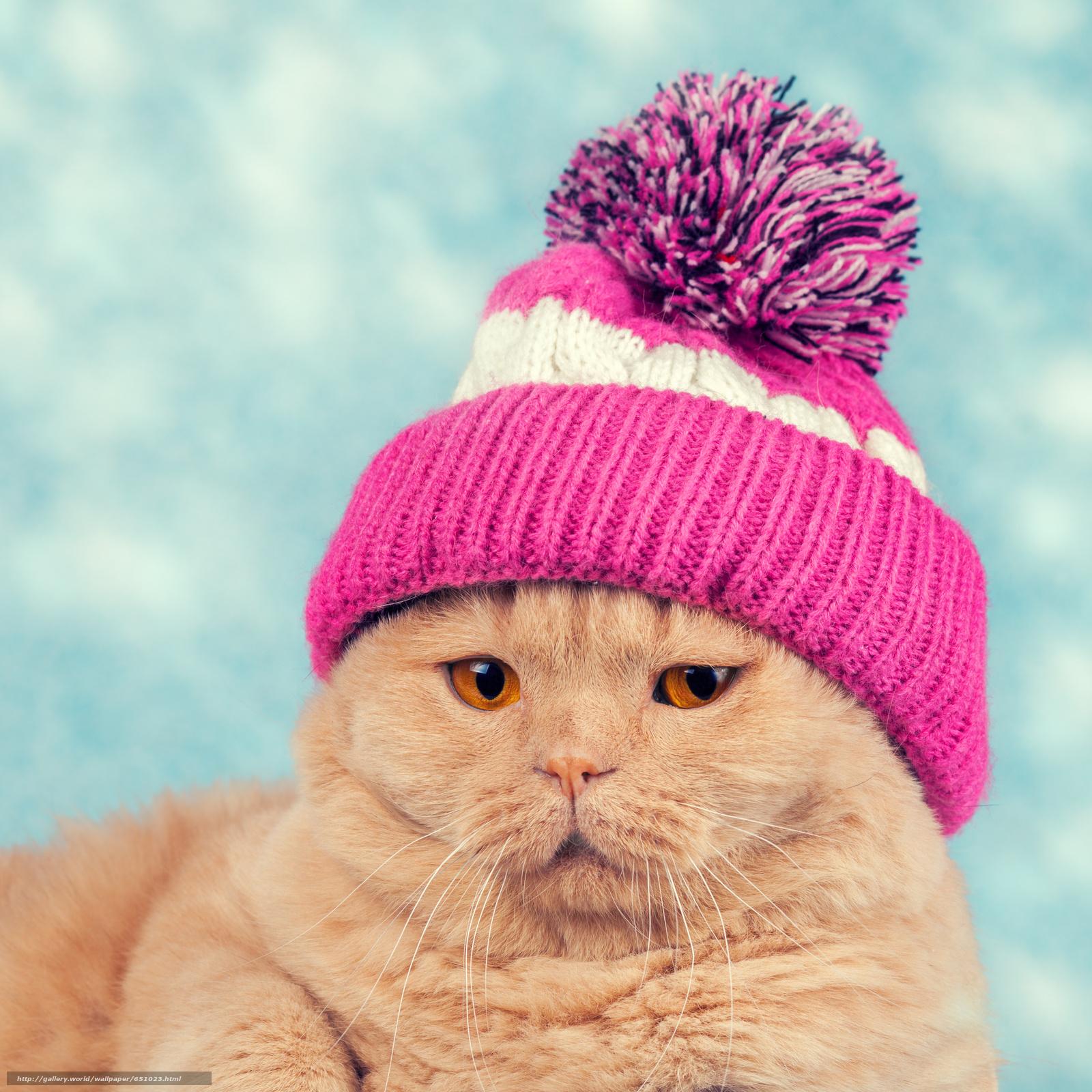 Download wallpaper COTE,  cat,  Cap free desktop wallpaper in the resolution 3156x3156 — picture №651023