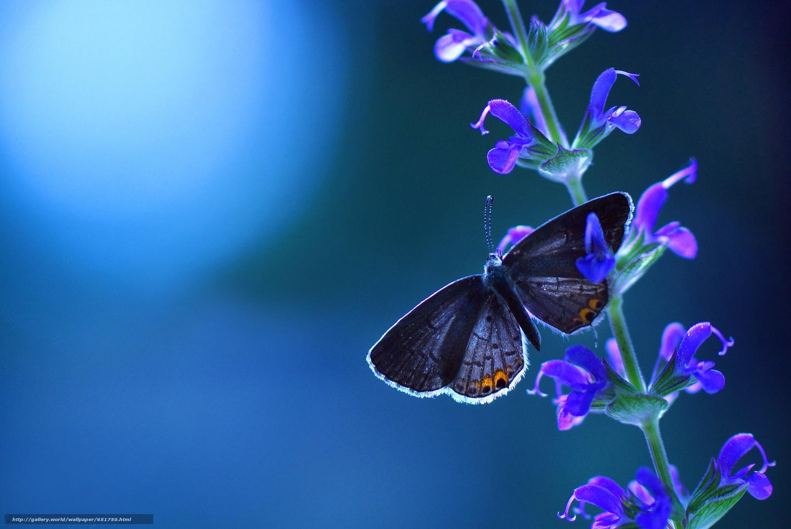 Скачать обои растенте,  цветы,  бабочка,  макро бесплатно для рабочего стола в разрешении 2048x1368 — картинка №651750