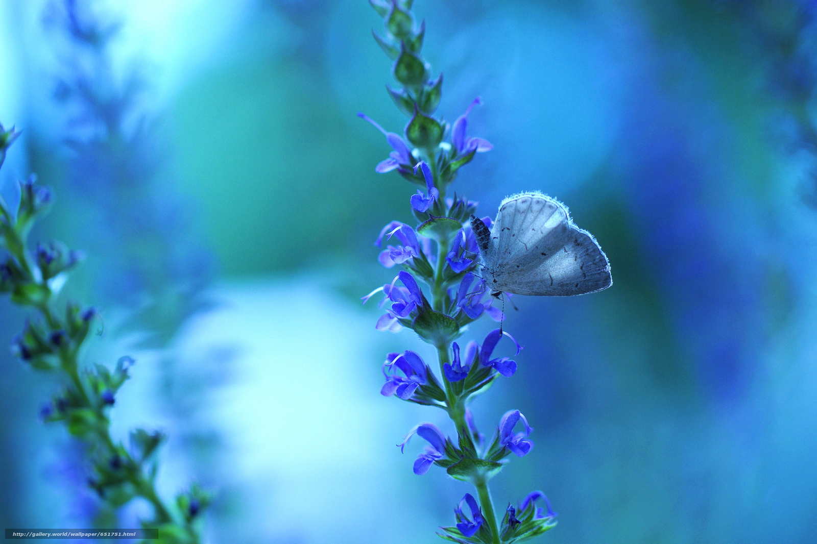 Descargar gratis rastente,  Flores,  mariposa,  Macro Fondos de escritorio en la resolucin 2048x1365 — imagen №651751