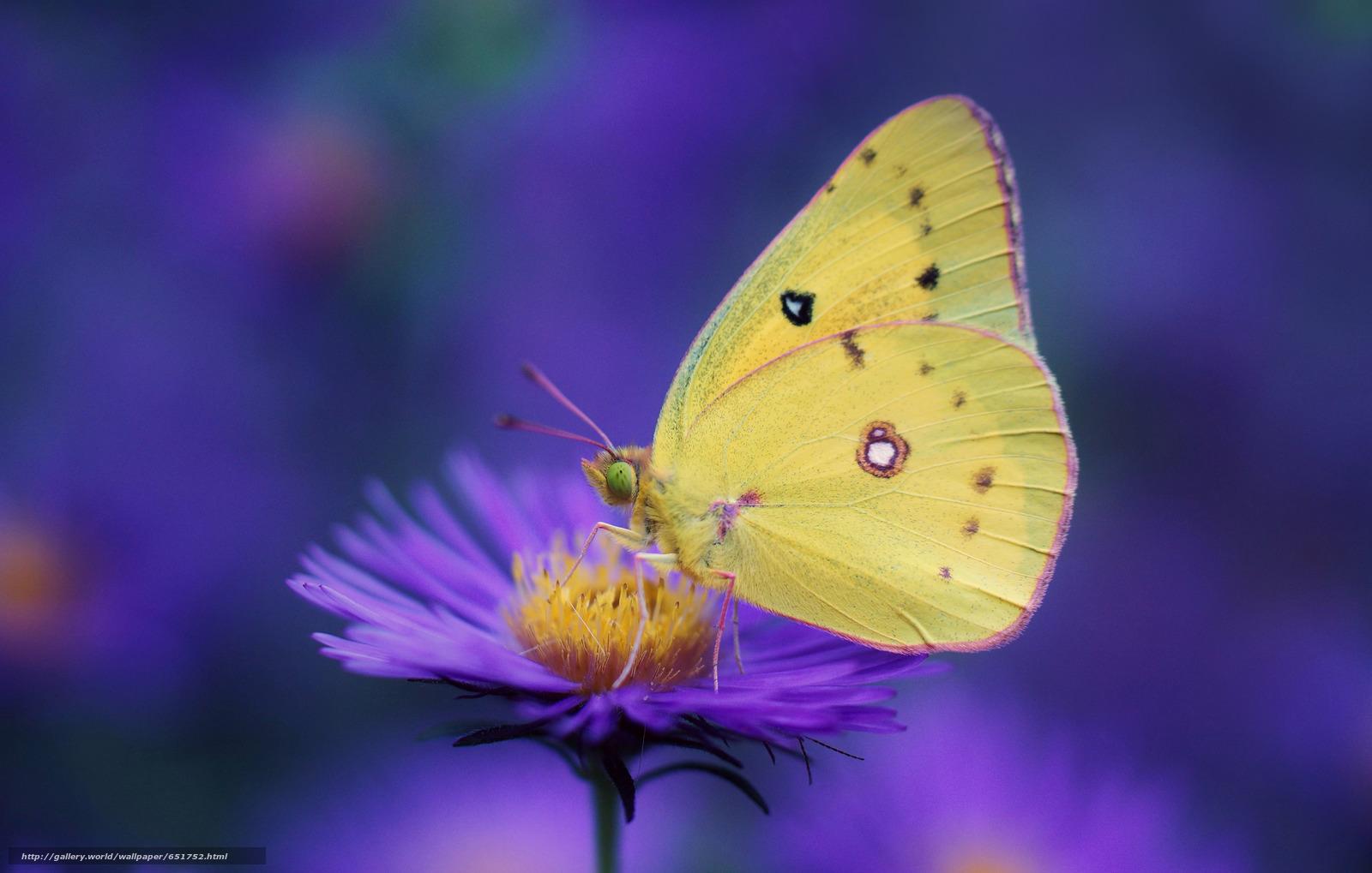 Descargar gratis flor,  mariposa,  Macro Fondos de escritorio en la resolucin 2048x1304 — imagen №651752