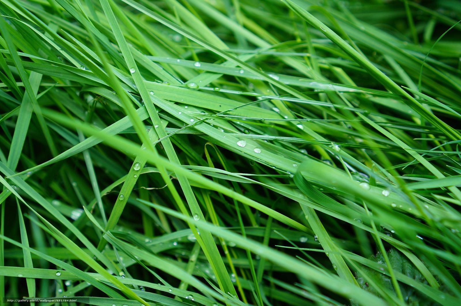 Download wallpaper grass,  dew,  Macro free desktop wallpaper in the resolution 2048x1361 — picture №651754