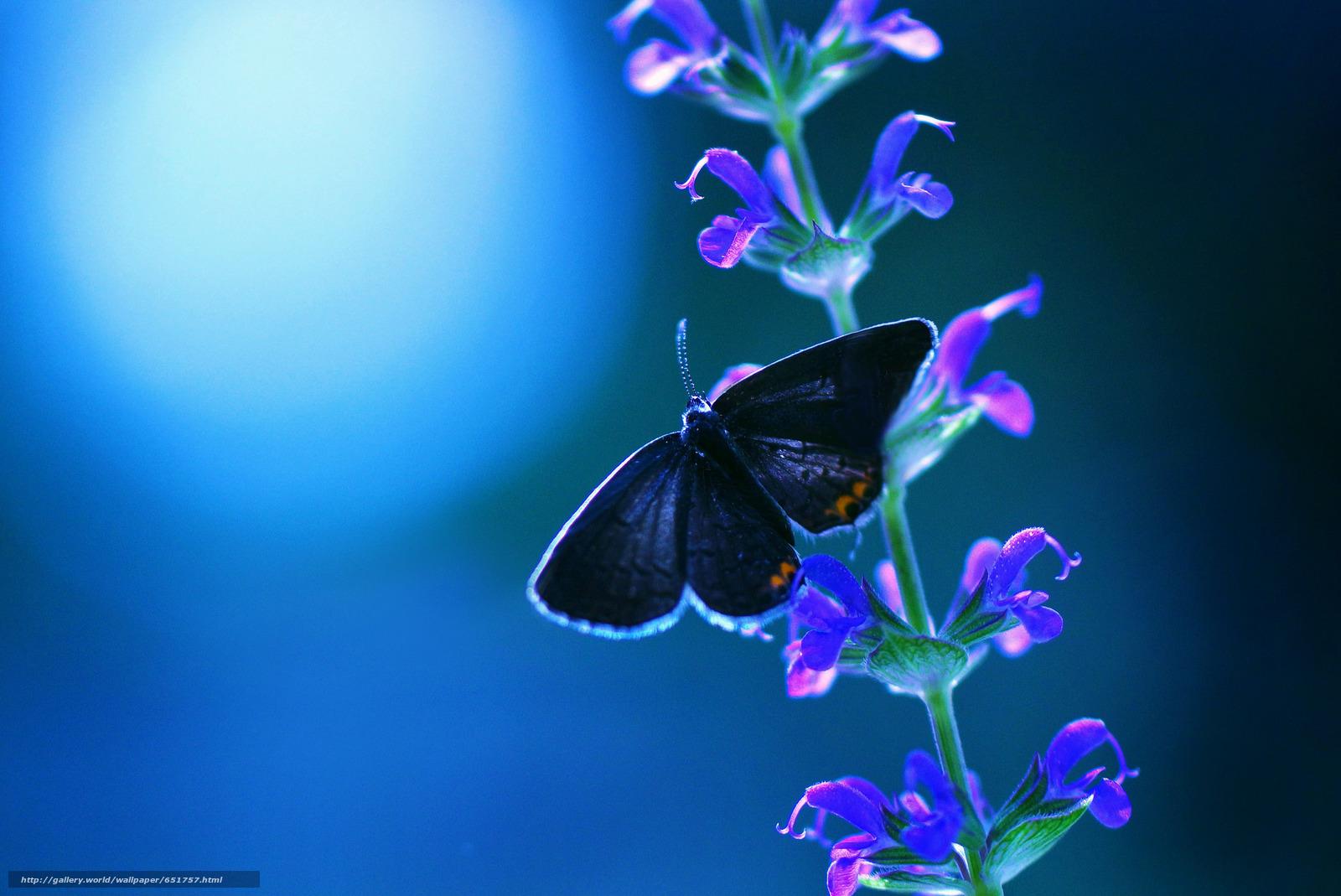 Скачать обои растенте,  цветы,  бабочка,  макро бесплатно для рабочего стола в разрешении 2048x1368 — картинка №651757