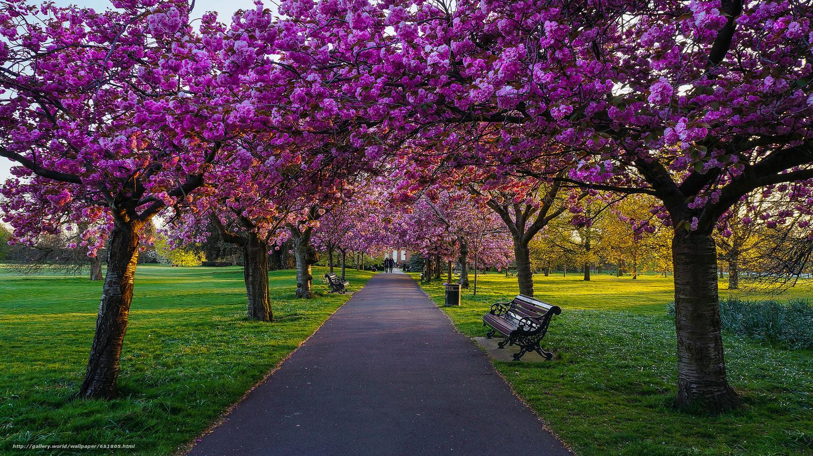 Скачать обои Гринвич Парк,  Лондон,  деревья,  цветение бесплатно для рабочего стола в разрешении 2048x1151 — картинка №651805