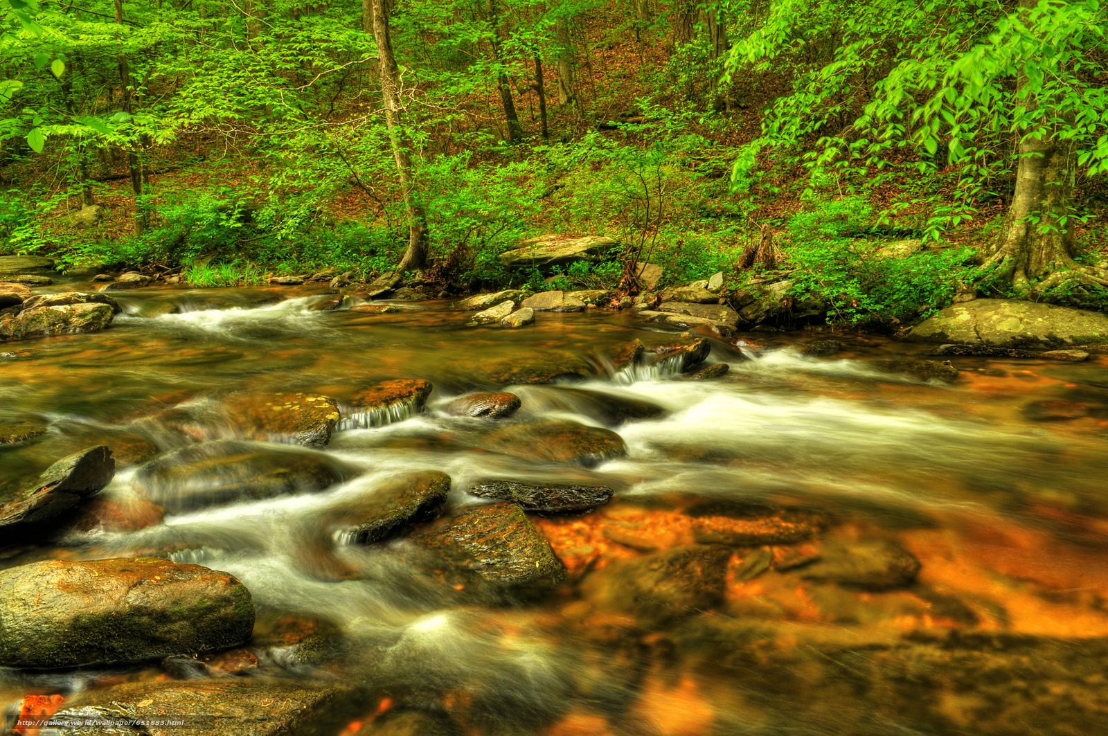 Download Hintergrund Fluss,  Wald,  Bäume,  Natur Freie desktop Tapeten in der Auflosung 2048x1361 — bild №651853