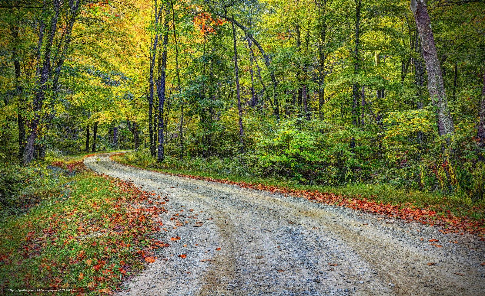 scaricare gli sfondi autunno,  stradale,  foresta,  alberi Sfondi gratis per la risoluzione del desktop 2048x1253 — immagine №651901