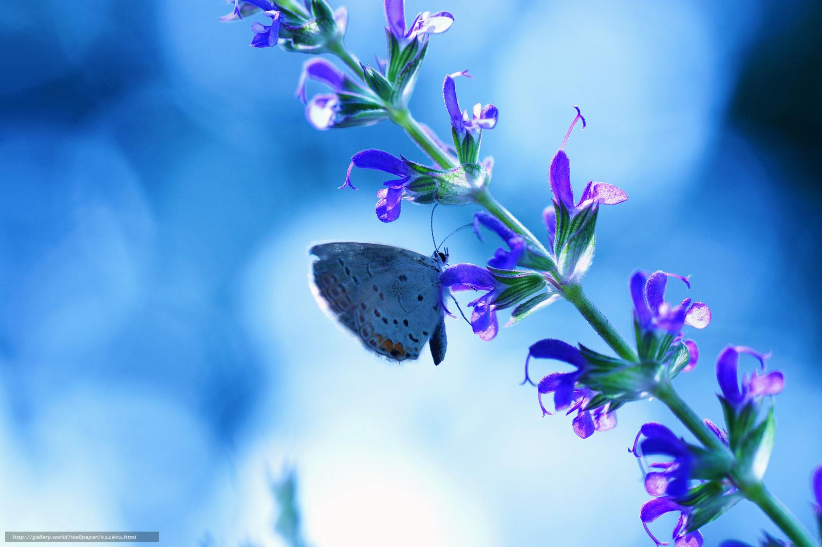 Скачать обои растенте,  цветы,  бабочка,  макро бесплатно для рабочего стола в разрешении 2048x1365 — картинка №651905