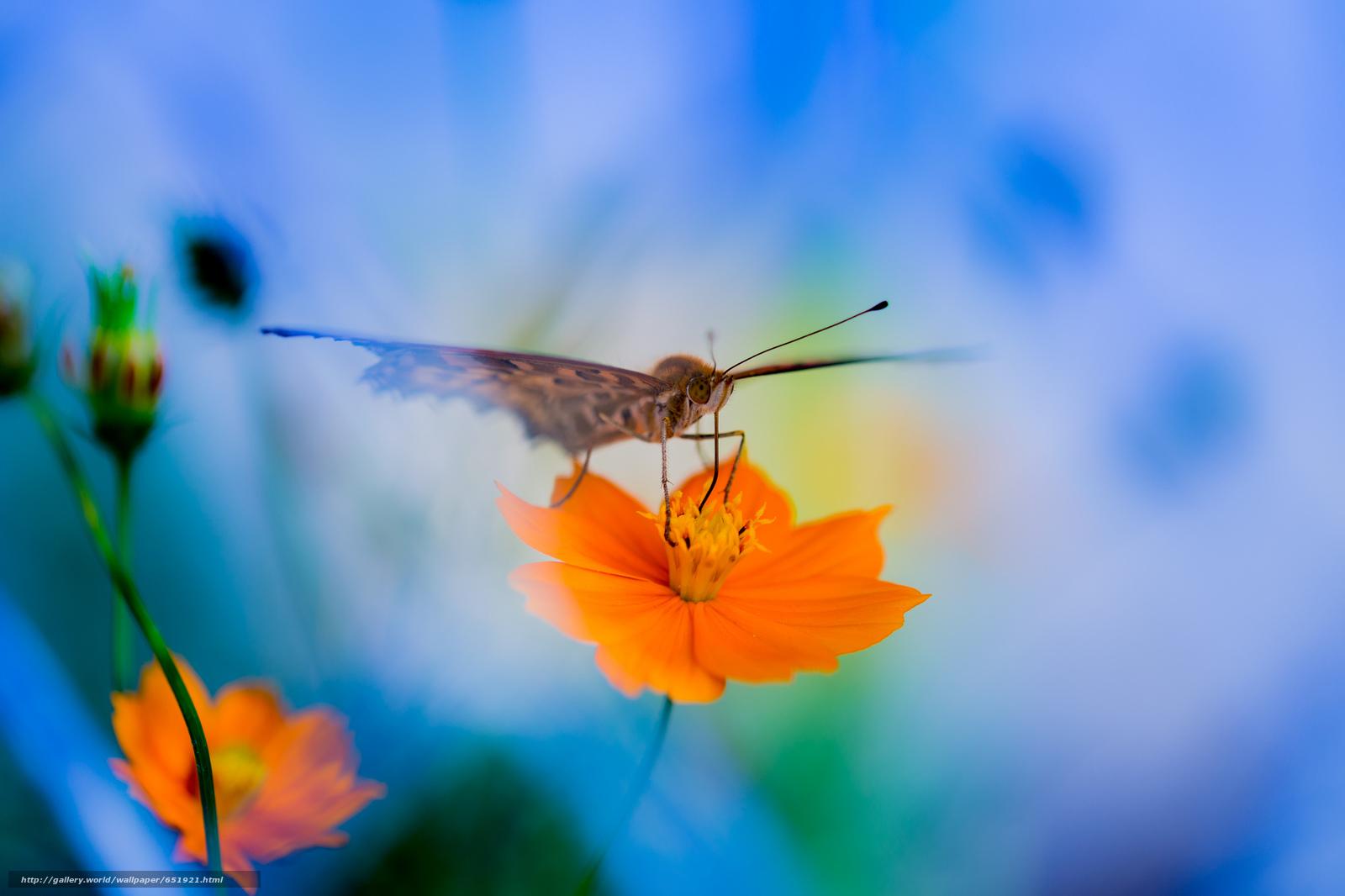 Скачать обои цветок,  бабочка,  макро бесплатно для рабочего стола в разрешении 2048x1365 — картинка №651921