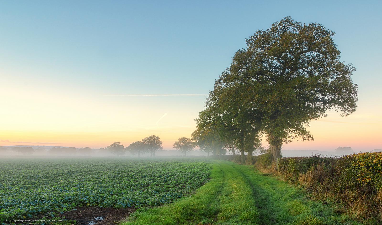 Descargar gratis campo,  carretera,  árboles,  niebla Fondos de escritorio en la resolucin 2048x1208 — imagen №651941