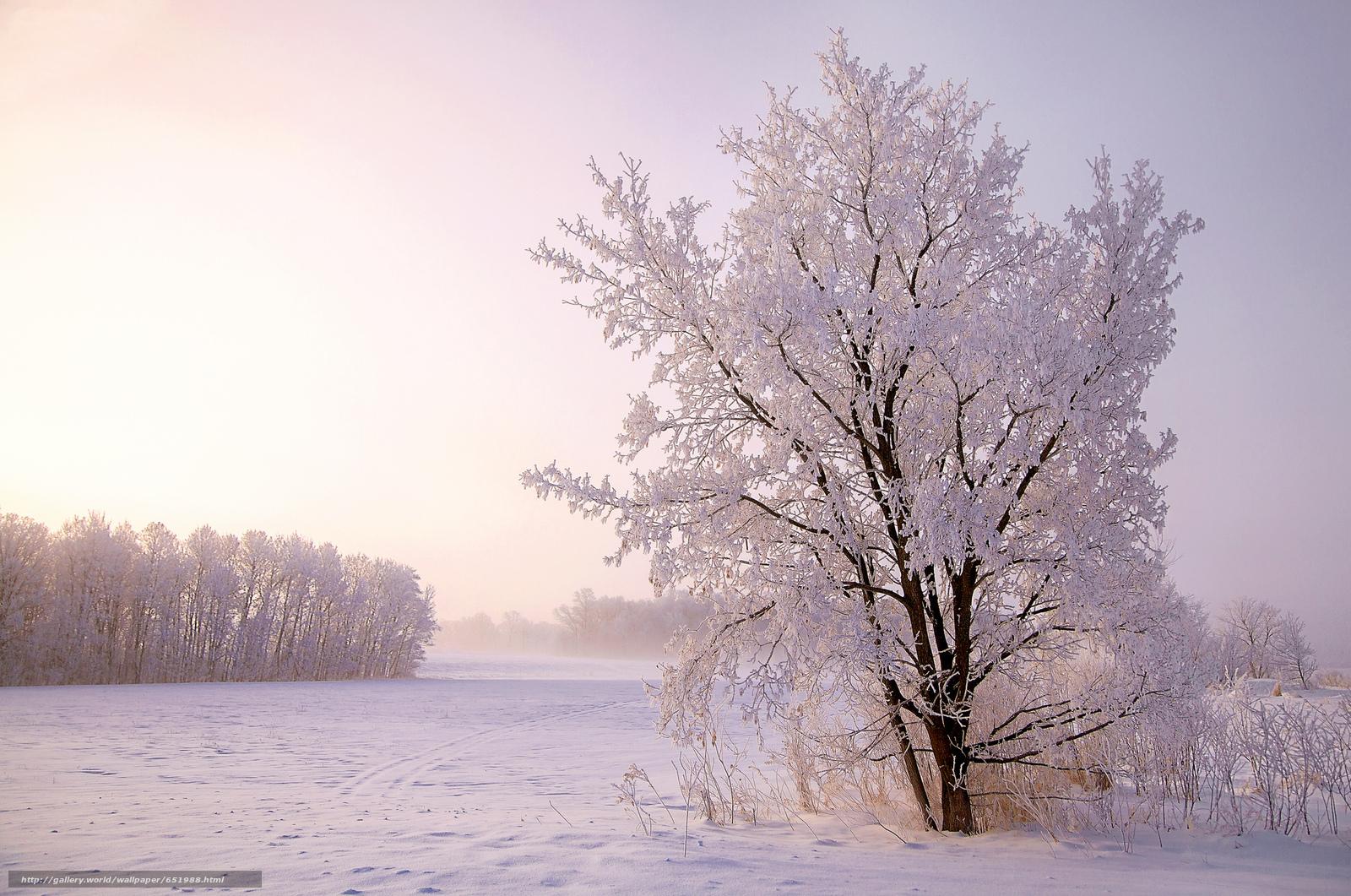 Descargar gratis invierno,  nieve,  árboles,  paisaje Fondos de escritorio en la resolucin 2048x1358 — imagen №651988