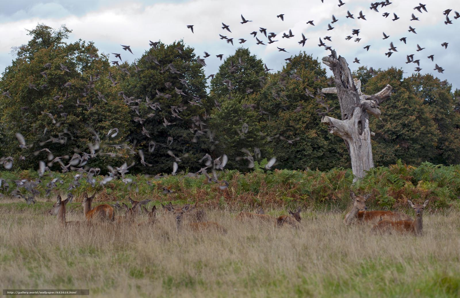 Скачать обои олень,  олени,  животные,  парнокопытные бесплатно для рабочего стола в разрешении 2048x1329 — картинка №652025