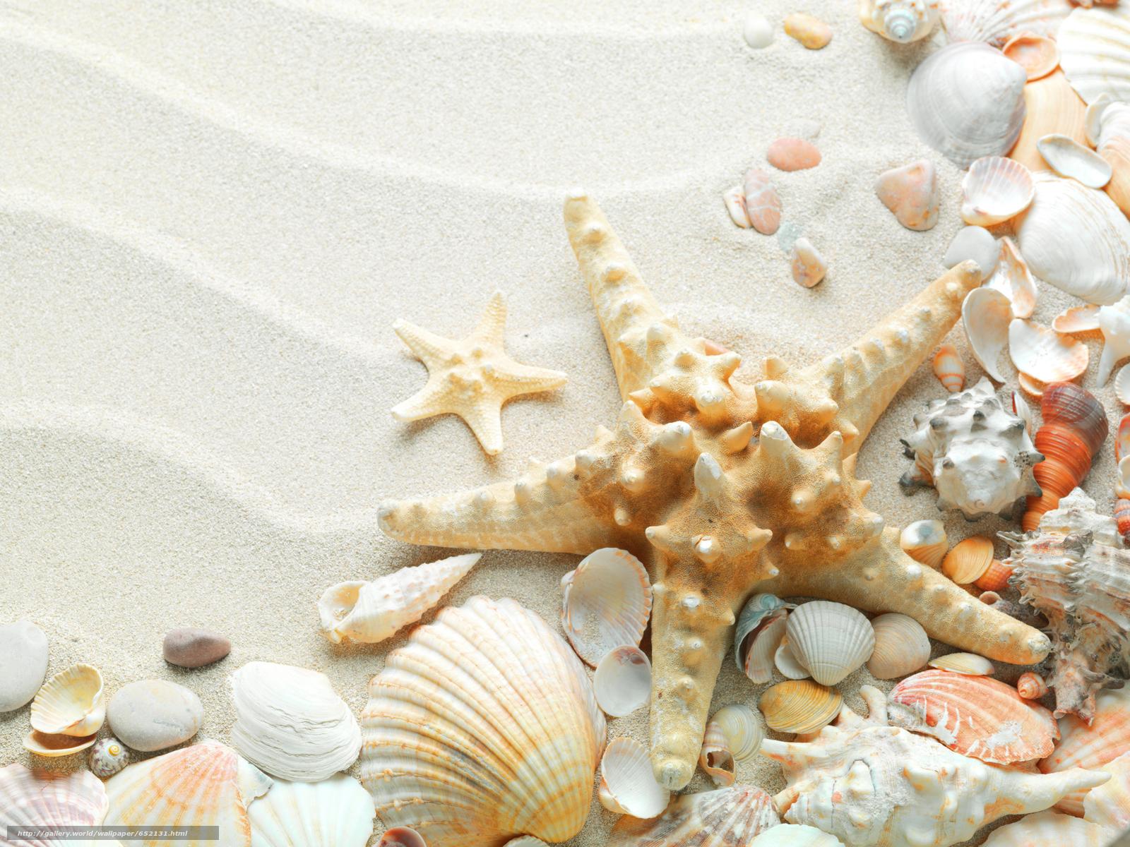 壁紙をダウンロード Texture テクスチャー 貝殻 砂 デスクトップの解像度のための無料壁紙 7216x5412 絵