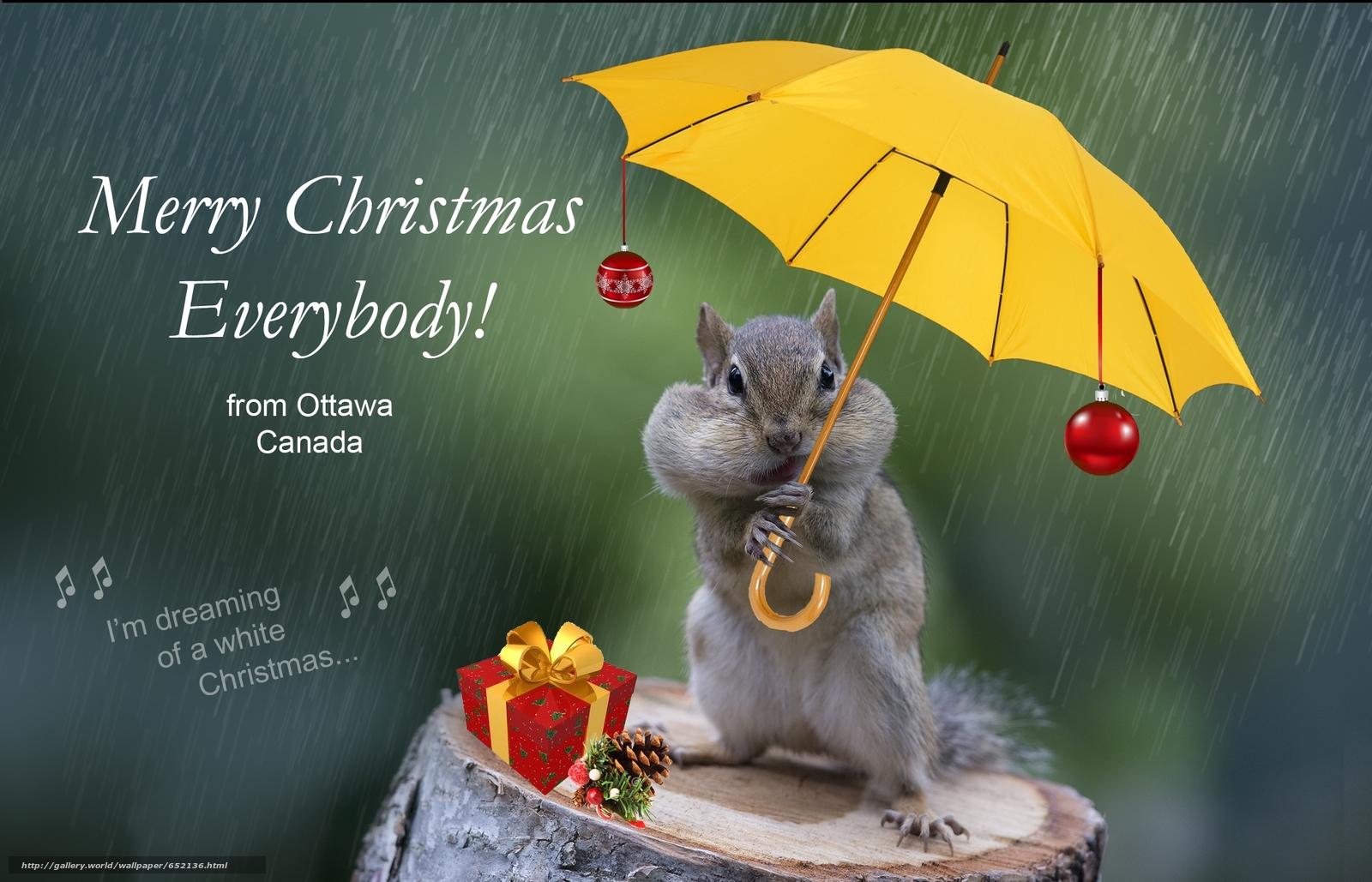 Descargar gratis ardilla,  TRONCOS,  paraguas,  roedor Fondos de escritorio en la resolucin 2048x1317 — imagen №652136