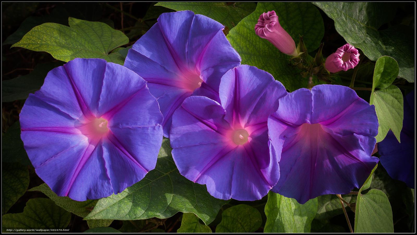 Descargar gratis Flores,  follaje,  flora Fondos de escritorio en la resolucin 2295x1296 — imagen №652370