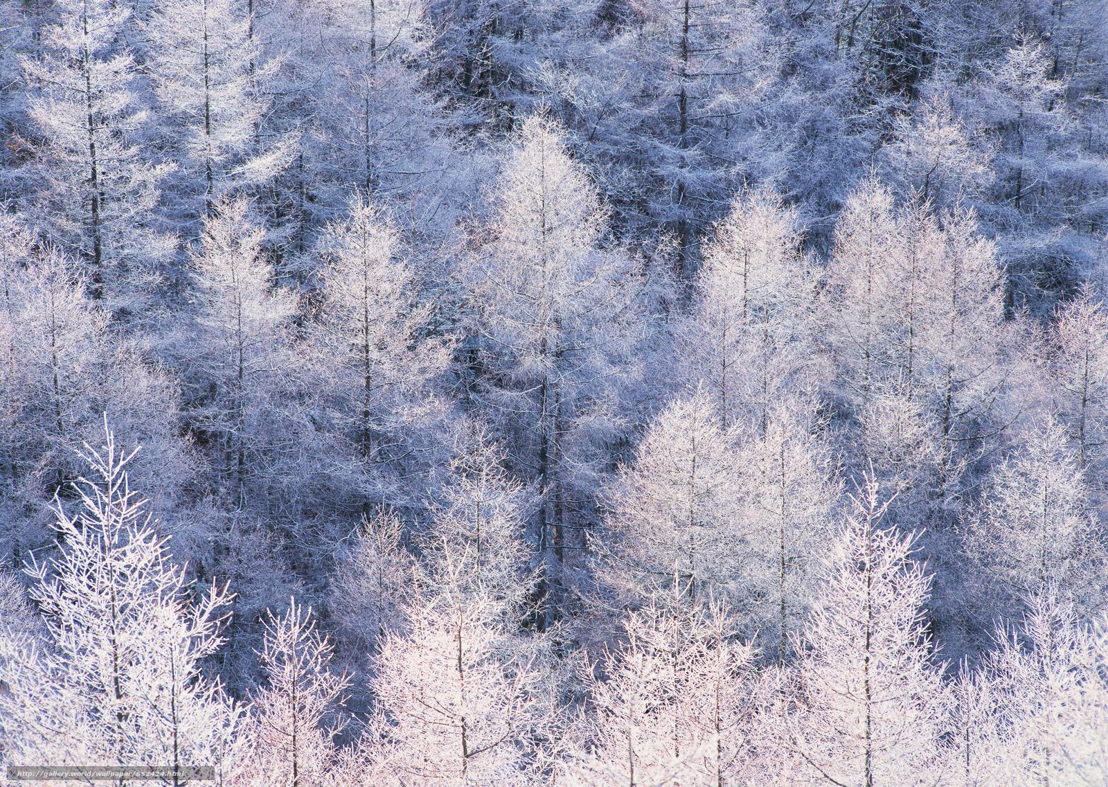 scaricare gli sfondi inverno,  natura,  alberi,  nevicata Sfondi gratis per la risoluzione del desktop 2950x2094 — immagine №652424