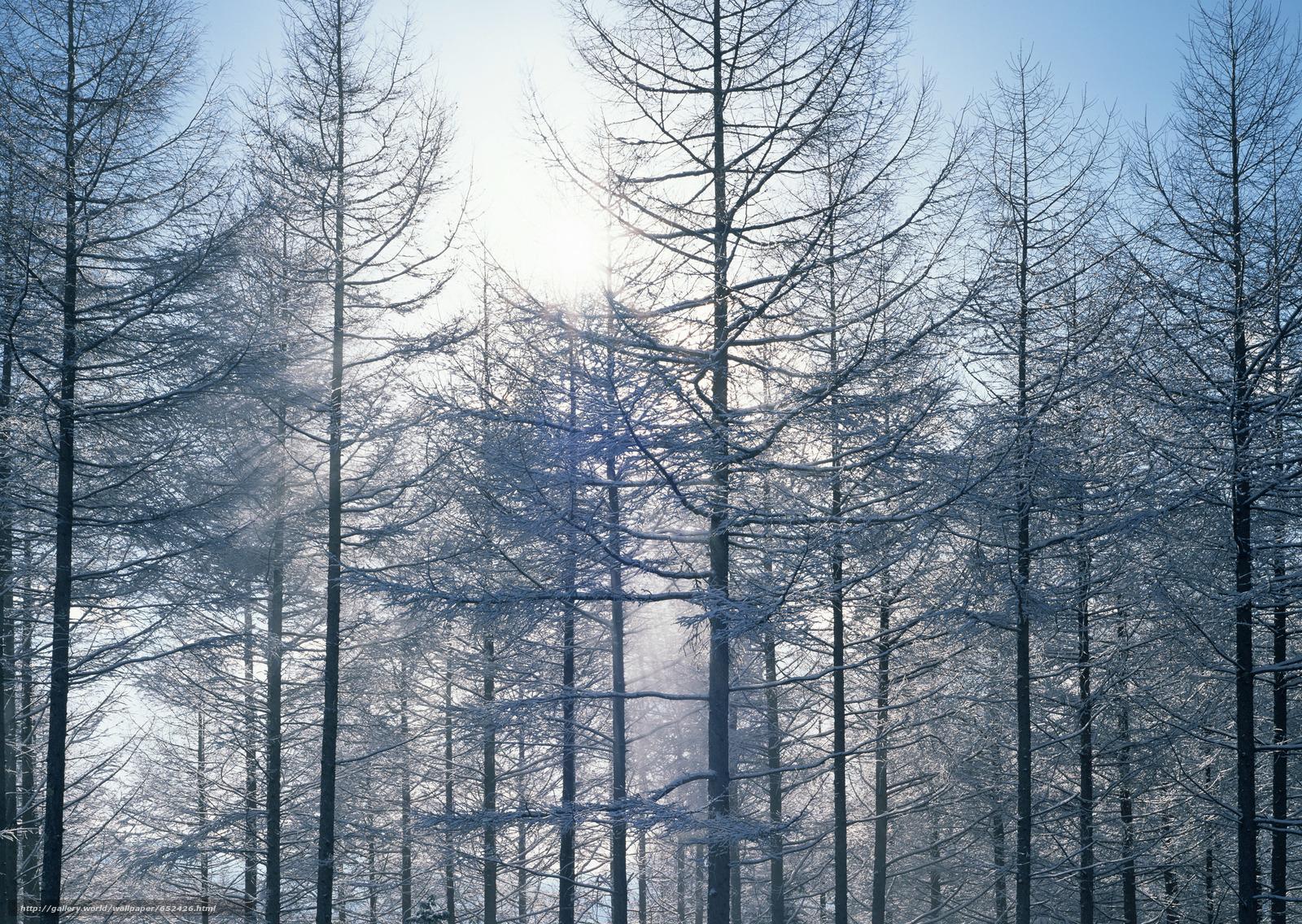 Скачать обои зима,  природа,  деревья,  снег бесплатно для рабочего стола в разрешении 2950x2094 — картинка №652426