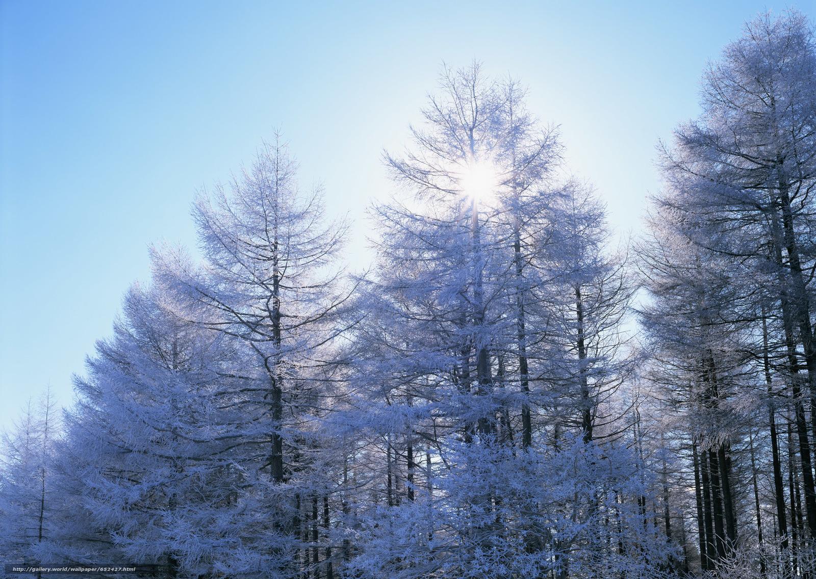 Скачать обои зима,  природа,  деревья,  снег бесплатно для рабочего стола в разрешении 2950x2094 — картинка №652427