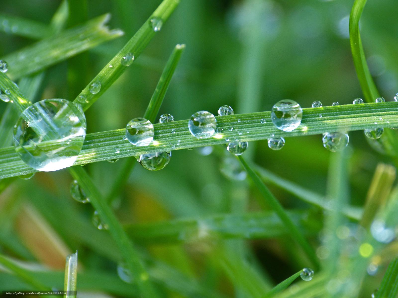 Download wallpaper grass,  dew,  drops,  Macro free desktop wallpaper in the resolution 3648x2736 — picture №652507