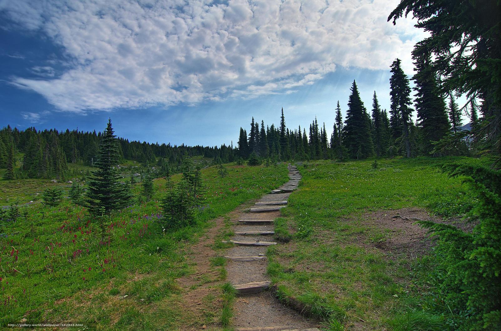 scaricare gli sfondi Mount Rainier National Park,  Montagne,  Colline,  alberi Sfondi gratis per la risoluzione del desktop 4914x3247 — immagine №652515