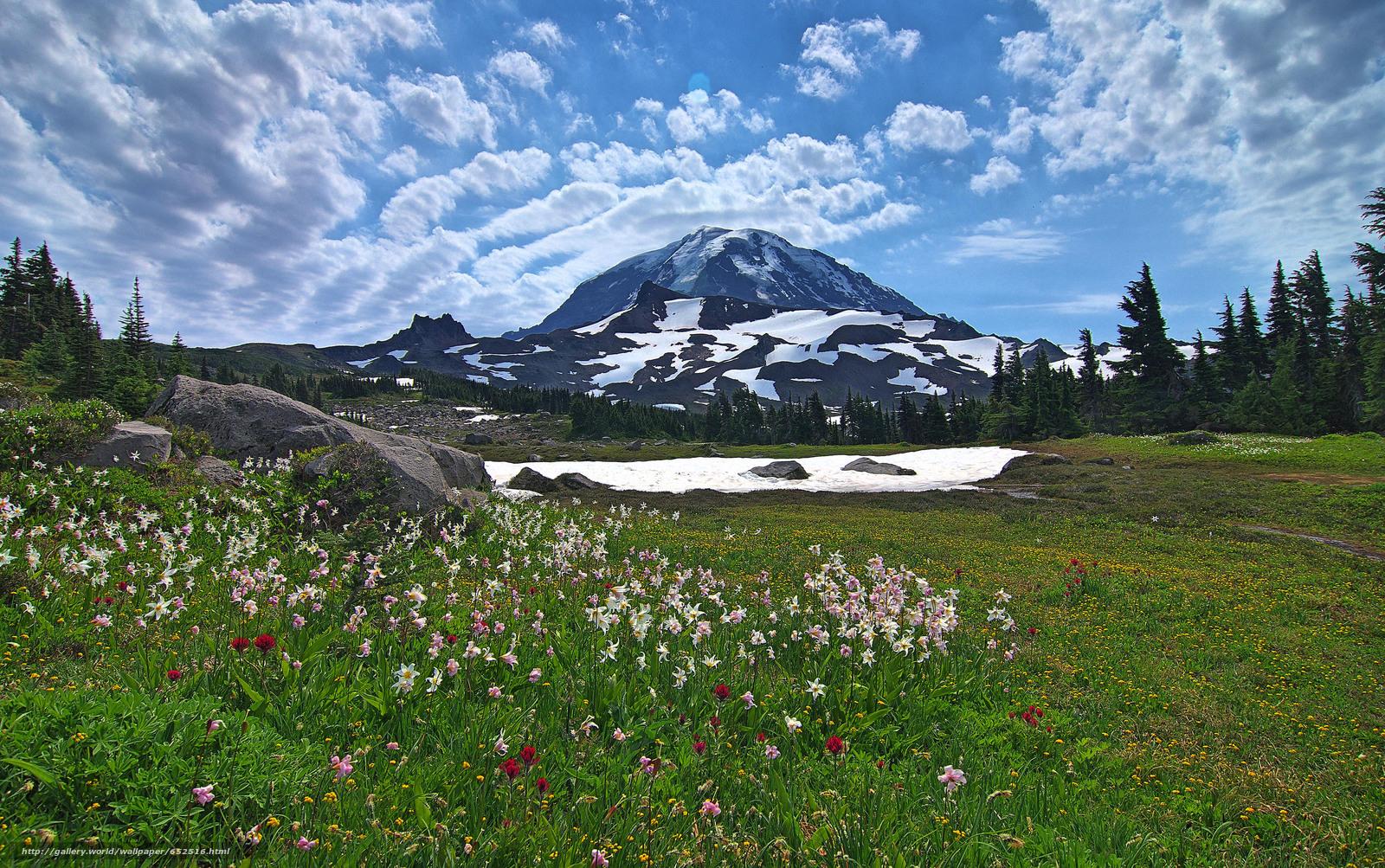 scaricare gli sfondi Mount Rainier National Park,  Montagne,  Colline,  alberi Sfondi gratis per la risoluzione del desktop 4710x2954 — immagine №652516