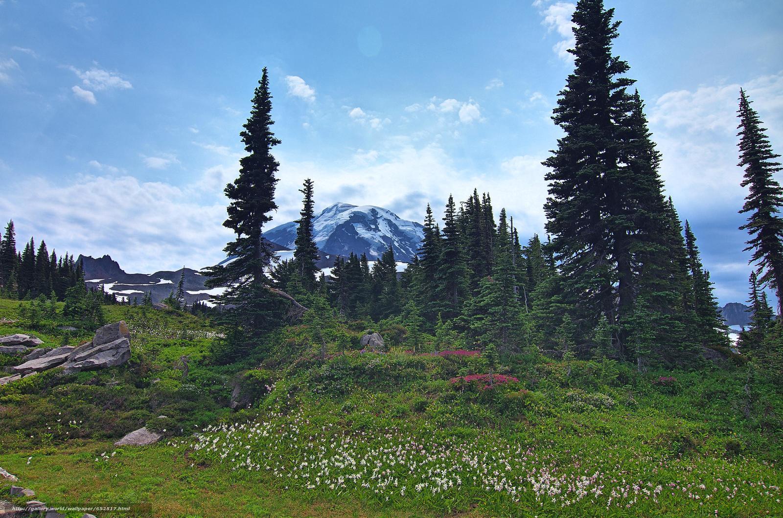 scaricare gli sfondi Mount Rainier National Park,  Montagne,  Colline,  alberi Sfondi gratis per la risoluzione del desktop 4895x3241 — immagine №652517