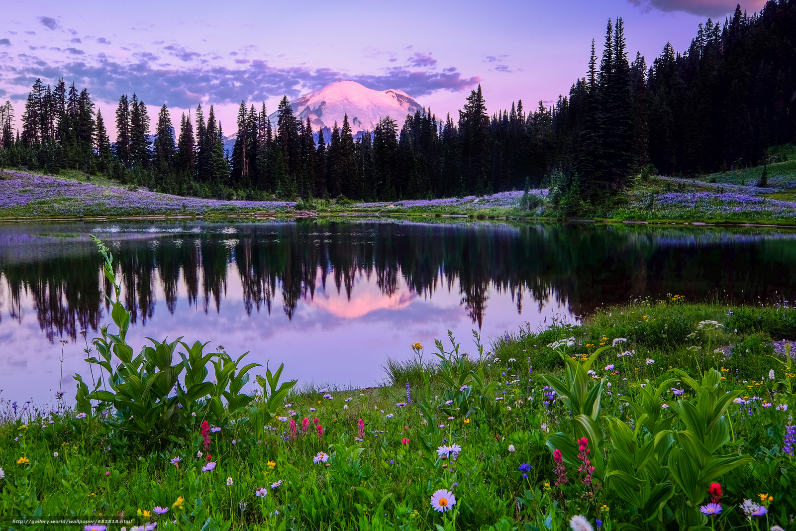 scaricare gli sfondi Mount Rainier National Park,  Lago Tipsoo,  campo,  Fiori Sfondi gratis per la risoluzione del desktop 4896x3264 — immagine №652518