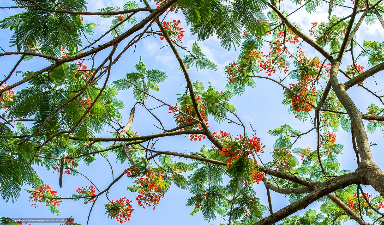 Скачать обои деревья,  ветки,  листья,  цветы бесплатно для рабочего стола в разрешении 4969x2910 — картинка №652535