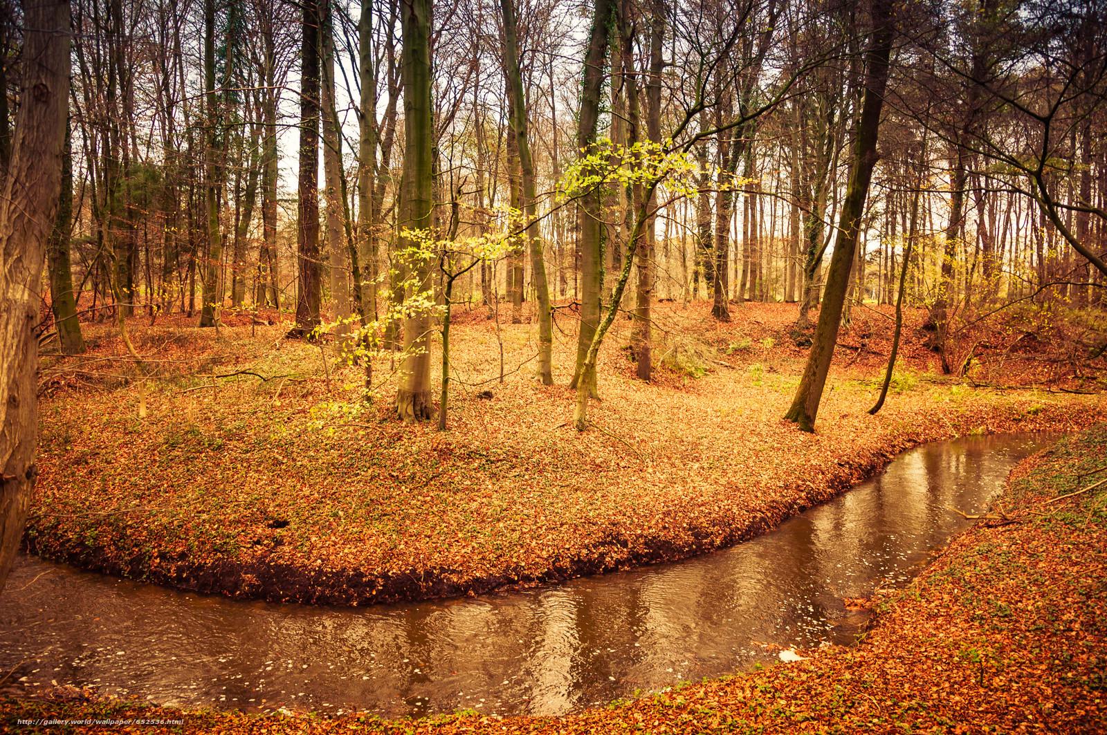 Скачать обои лес,  деревья,  осень,  река бесплатно для рабочего стола в разрешении 4288x2848 — картинка №652536