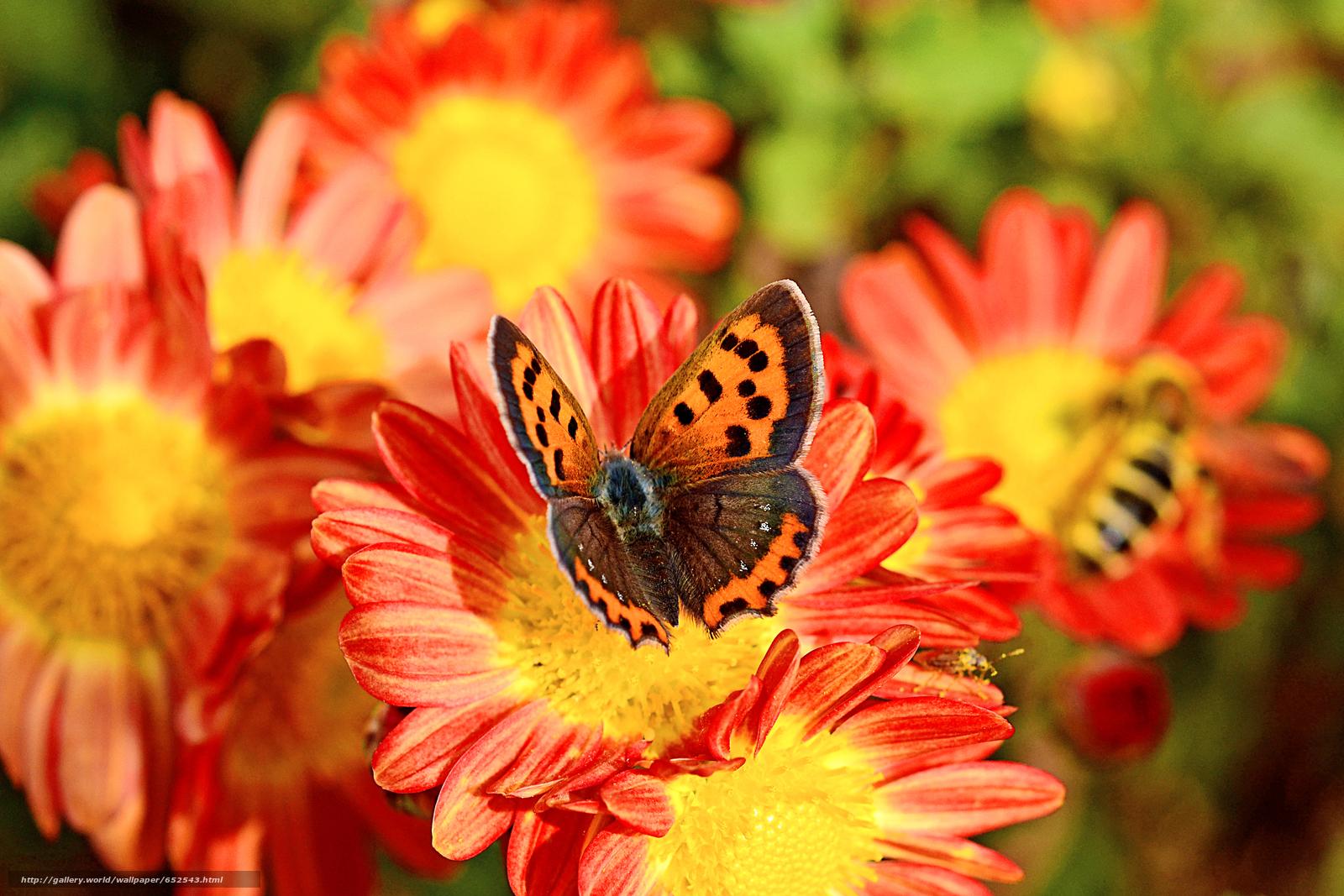 Baixar Wallpaper Flores,  borboleta,  Macro Papis de parede grtis na resoluo 3909x2606 — quadro №652543