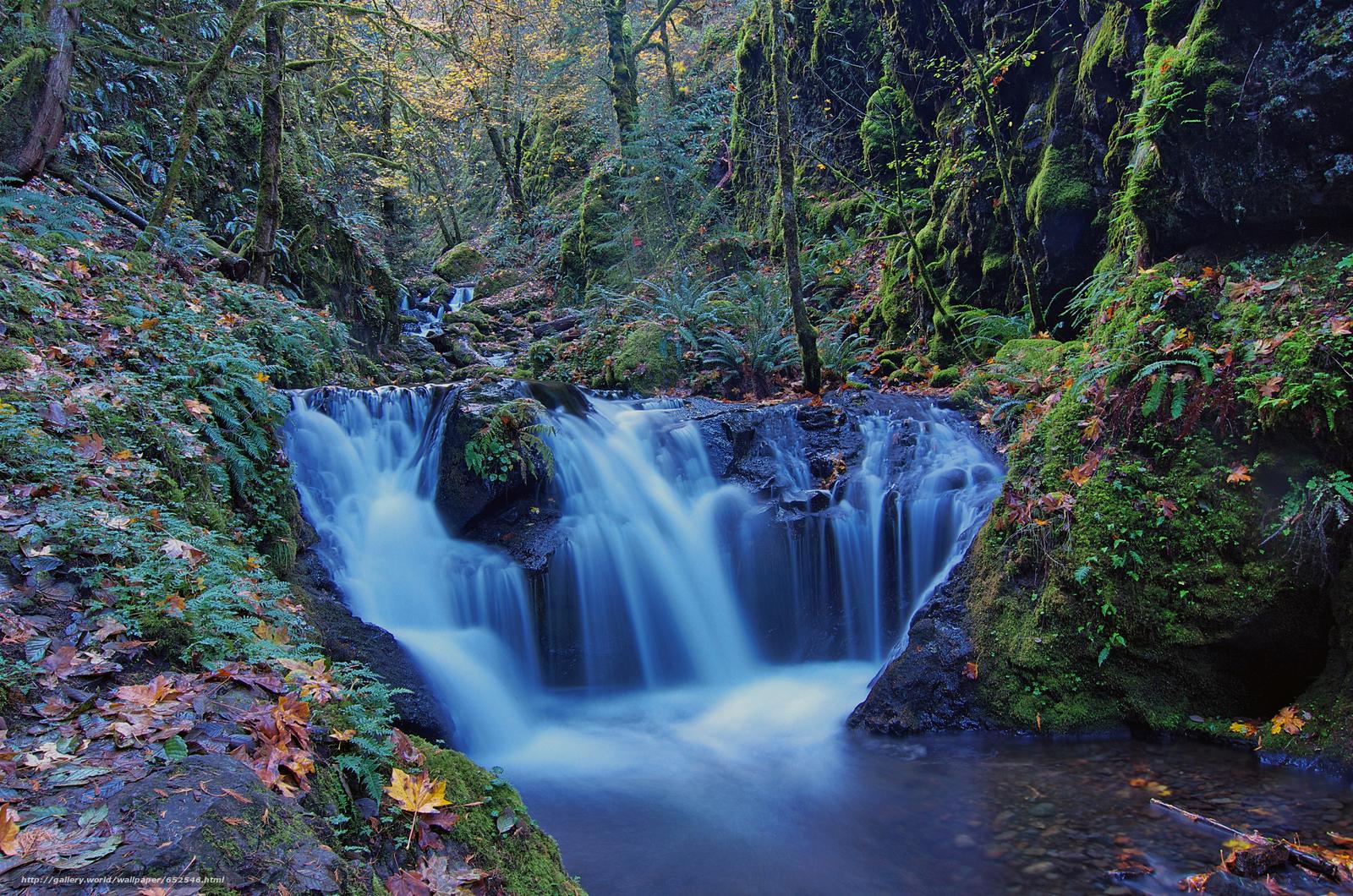Скачать обои лес,  деревья,  водопад,  река бесплатно для рабочего стола в разрешении 4923x3260 — картинка №652546