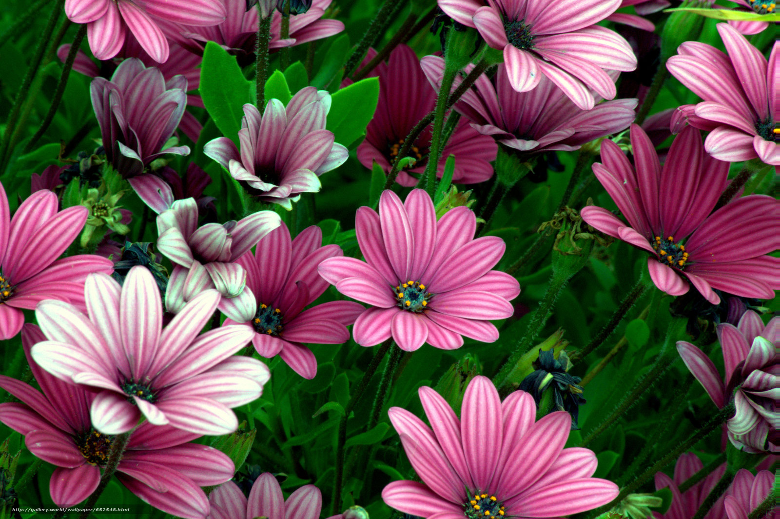 scaricare gli sfondi aiuola,  Fiori,  flora Sfondi gratis per la risoluzione del desktop 5496x3656 — immagine №652548