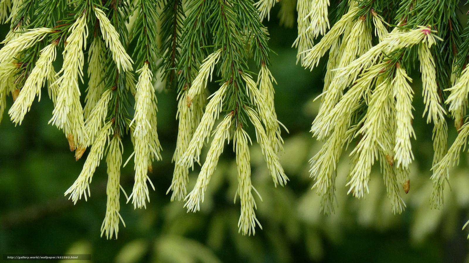 Download wallpaper branch,  spruce,  fir-tree,  needles free desktop wallpaper in the resolution 2048x1151 — picture №652593