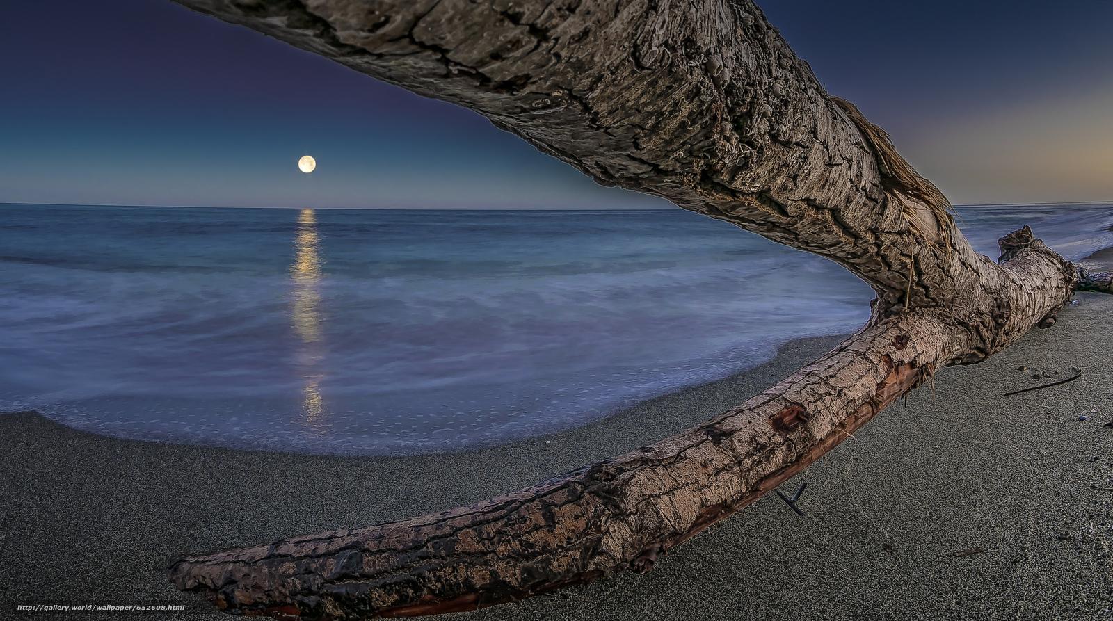 Скачать обои море,  коряга,  дерево,  небо бесплатно для рабочего стола в разрешении 2048x1143 — картинка №652608
