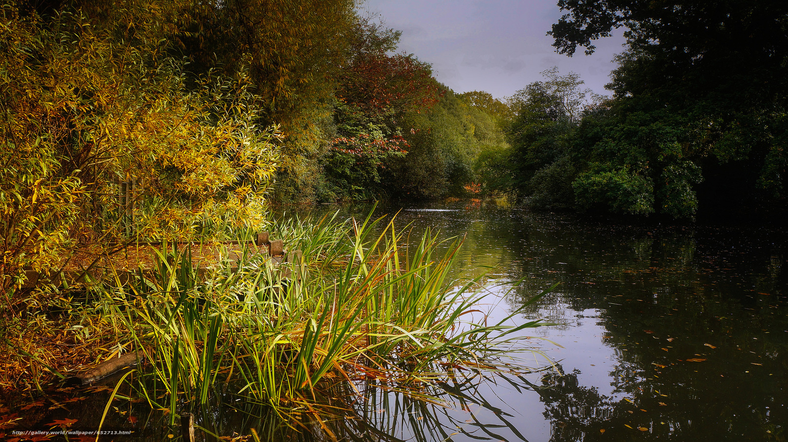 scaricare gli sfondi lago,  foresta,  alberi,  paesaggio Sfondi gratis per la risoluzione del desktop 2048x1151 — immagine №652713